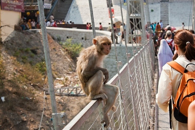 Move along, nothing to see here, eh? Rishikesh, India
