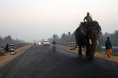 Early morning on the road to the Cochin airport. We brake for elephants.