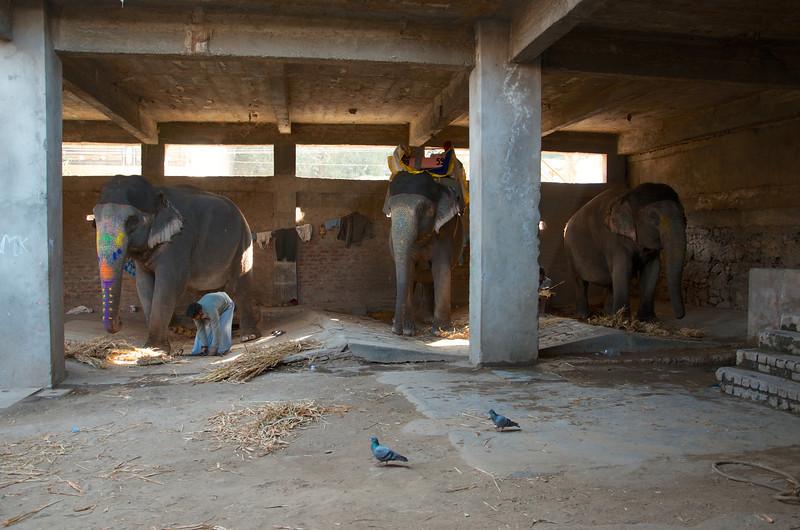 Elephant Stables- Jaipur