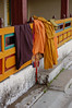 Traditional monks' colour, orange.