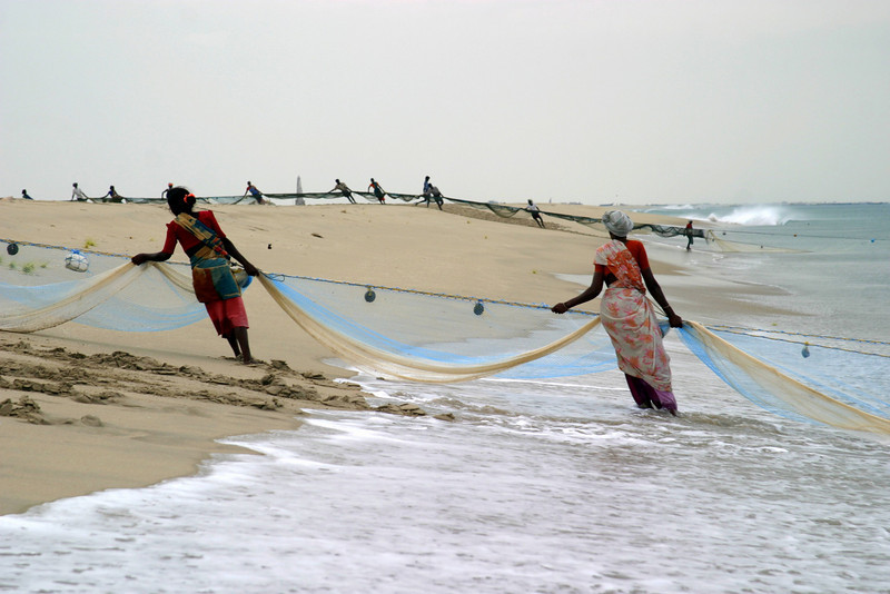 Dhanushkodi fisherman; men and women, drawing in the fish nets from the Guld of Mannar.