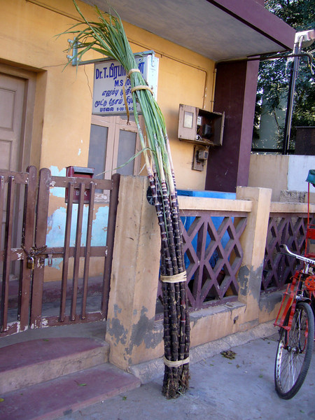 Sugar Cane delivery Maudrai, Tamil Nadu, India Meenakshi Temple