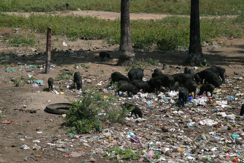 garbage, normal. Train from Manamadurai Junction  to Rameswaram, Tamil Nadu, India