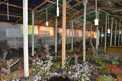 Thread garden - Artificial Plant Nursery, Ooty