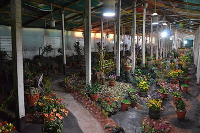 Thread garden - Artificial Plant Nursery, Ooty
