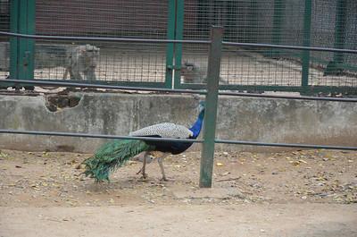 Arignar Anna Zoological Park - Vandalur Zoo, Chennai