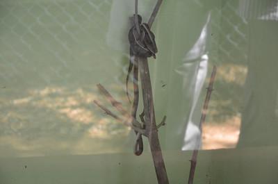 Chennai Snake Park - Guindy Snake Park, Chennai, India
