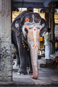Temple elephant in Kailasanthar temple
