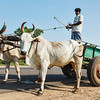 Unidentified indian man on cart with yoke of oxen
