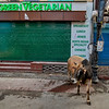 The irony of a cow outside a vegetarian restaurant, Mussourie, Uttarakhand, India