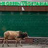 The irony of a cow outside a vegetarian restaurant, Mussoorie, Uttarakhand, India