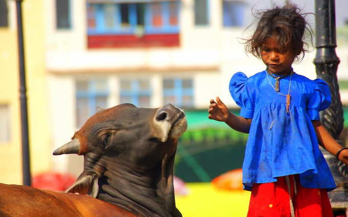 A cute girl with a cow in Udaipur, India