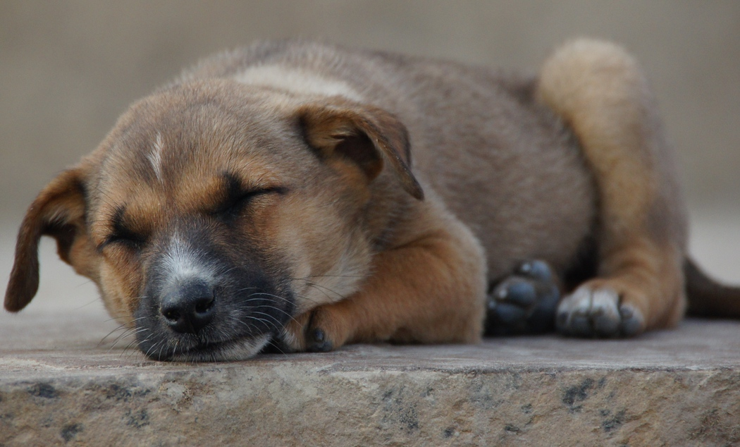 A dog peacefully sleeps on the ghats located in Varanasi, India.  This is a travel photo from Varanasi, India.