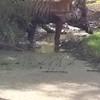 Arrowhead with a spotted deer head.