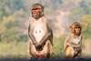 Rhesus Macaques ~ Monkeys