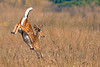 Spotted Deer at Bandhavgarh National Park