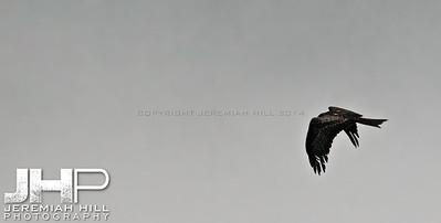 """Lone Hunter #1"", Rishikesh, Uttaranchal, India, 2007 Print IND3724-027"