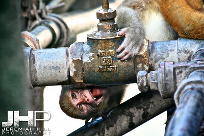 """Thirst Quencher"", Rishikesh, Uttaranchal, India, 2007 Print IND3714-282"