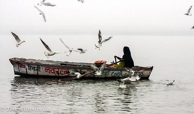 Gangis Vendor