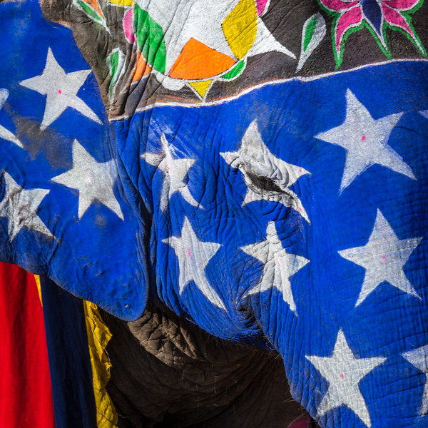 Star Spangled Elephant