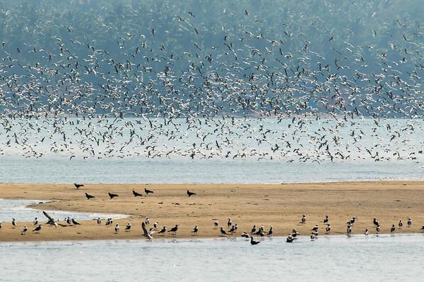 Bird on the Chapora River