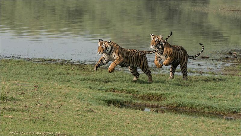 DSC_4513 Cubs on the Run 1200 web