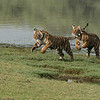 DSC_4513 Cubs on the Run 1200 web