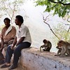 Primates in the Park - Tamil Nadu