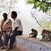 Primates in the Park - Tamil Nadu