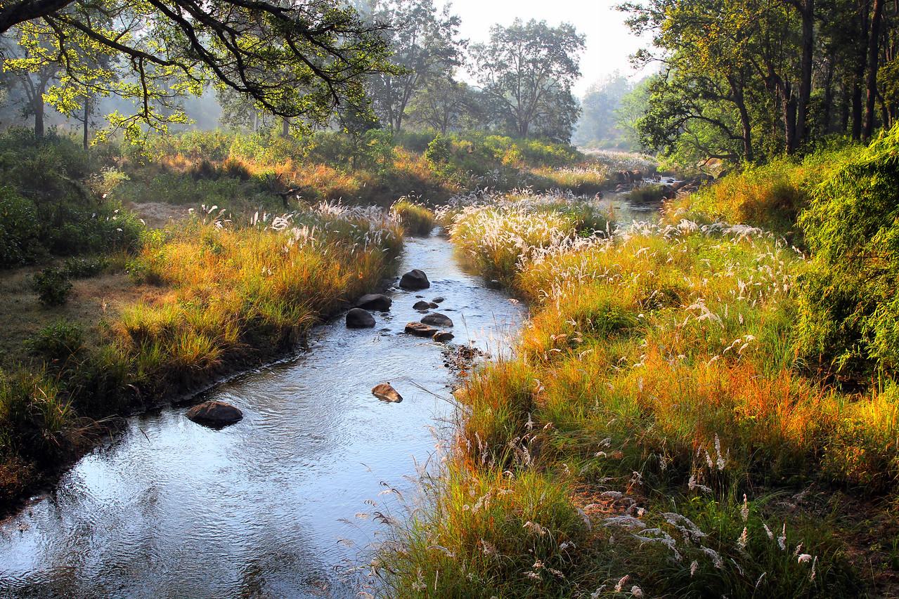 Kahna National Park, India