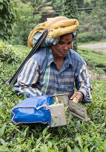Tea plantations near Periyar