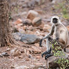 RJB_0930 Monkey on a Rock 1200 web