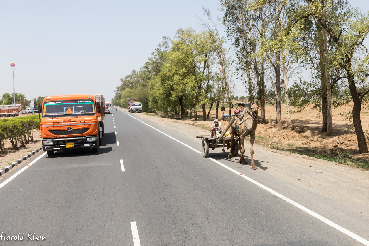 Camels, trucks, motorbikes, TucTuc's,  push carts...all mix it up on the roads and somehow, it all works!?