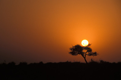 Sunset while sleeping in the desert.  Rajasthan India.
