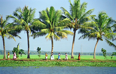 Palm Tree-lined Canal in Kerala Backwaters