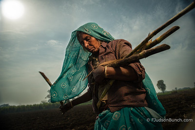 Woman plants sugar cane