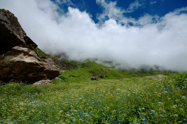 Meadows of alpine flowers in the Valley of Flowers