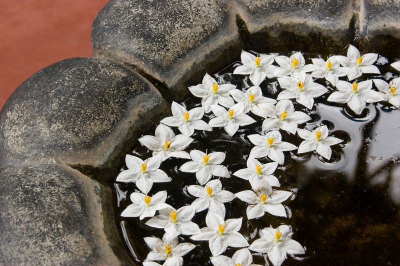 Flowers float in a stone water basin.<br /> <br /> Location: Haputale, Sri Lanka<br /> <br /> Lens used: 28-135mm f3.5-5.6 IS