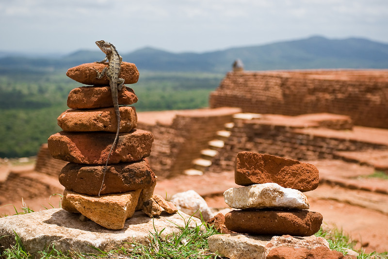 A lizard 'summits' a stack of rocks on the top of the Sigiriya rock.<br /> <br /> Location: Sigiriya, Sri Lanka<br /> <br /> Lens used: 17-40mm f4.0
