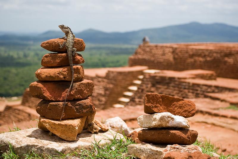 A lizard 'summits' a stack of rocks on the top of the Sigiriya rock.<br /> <br /> Location: Sigiriya, Sri Lanka<br /> <br /> Lens used: 17-40mm f4.0