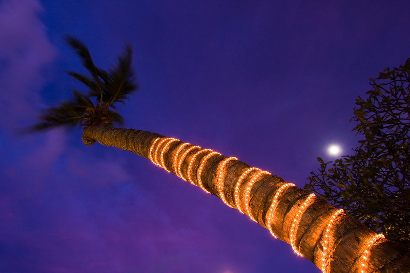 Dusk shot of a palm tree and mood lighting.<br /> <br /> Location: Mahé island, Seychelles<br /> <br /> Lens used: 10-22mm f3.5-4.5