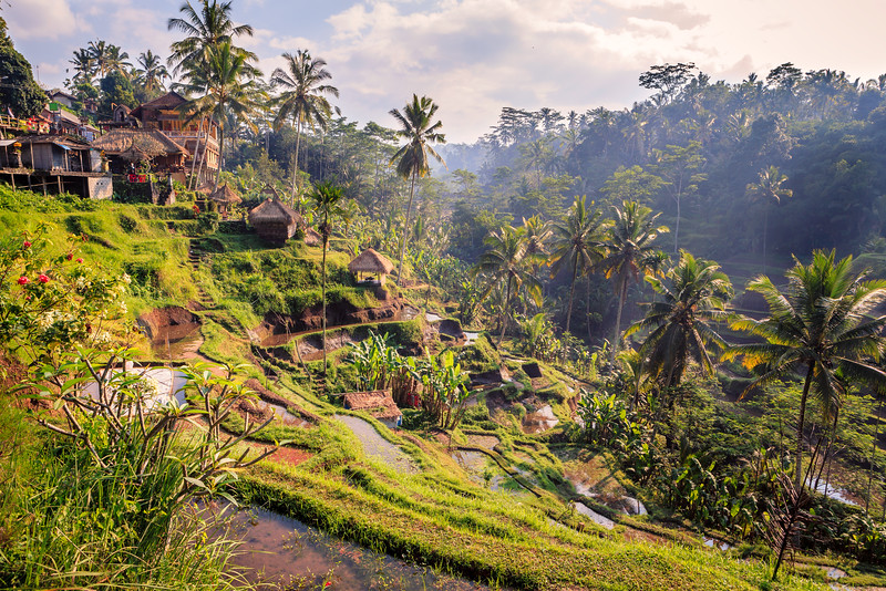 Spectacular rice field near Ubud