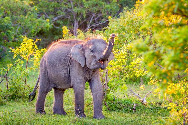 Sri Lanka, Yala National Park