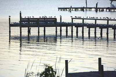birds_on_dock-2