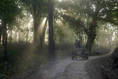 Morning Kanha