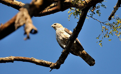 Kaziranga National Park, Assam, India
