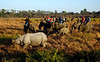 Tourists track rhinos from elephant back in the Kohora range of the park