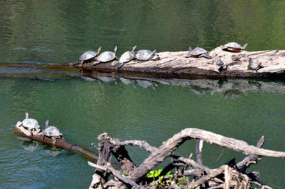 Turtles bask in the sunshine