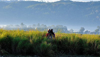 Early  morning at Kaziranga