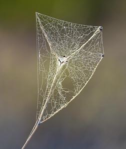 Desert Web